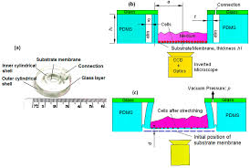 Zoom Tan Locations Rochester Ny Micromachines Free Full Text Mechanical Analysis Of A