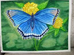 butterfly paintings in watercolour ellen hardwick
