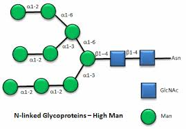 structure u0026 reactivity in chemistry ib4 imf carbohydrates