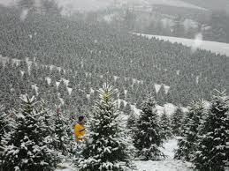 25 best christmas tree farm business ideas images on pinterest