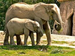 mother elephant and calf