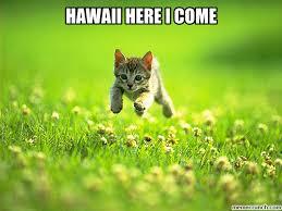 Hawaii Meme - image jpg