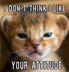 Angry Cat Meme - angry cat dump a day