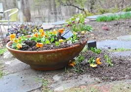 container garden tricks and trickster skunks plus other