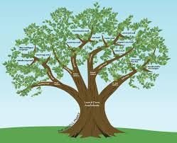 design family tree pertamini co