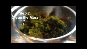 how to make moss graffiti youtube