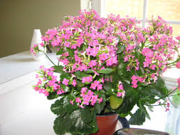 Tropical House Plants Names - tropical house plants names and pictures house and home design