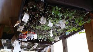getting an early start on the garden moving indoors basha blog
