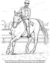 friesian horse requay beautiful lines friesian