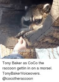 Raccoon Excellent Meme - 25 best memes about the raccoon the raccoon memes