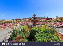 carlsbad flower garden the beautiful flower fields at carlsbad california stock photo