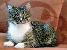 form for pet cats u2014 feral cat coalition of oregon