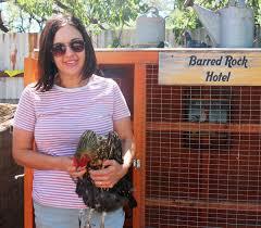 locals find joy in raising backyard chickens local news stories
