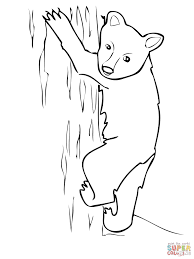 american black bear cub coloring free printable coloring pages