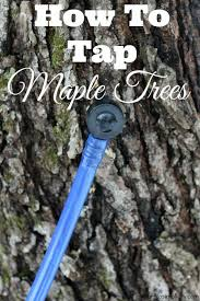 Backyard Sugaring 39 Best Tapping Trees For Syrup Images On Pinterest Maple Syrup