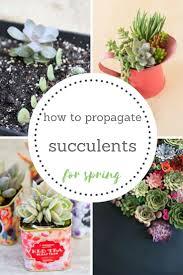 the 25 best succulent garden diy indoor ideas on pinterest