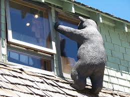 Tahoe Lodge Style Furnishings Cabin Fever Tahoe Bear Necessities - Bear furniture