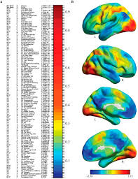 data driven extraction of a nested model of human brain function