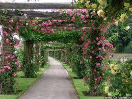 Royal Botanic Gardens Kew Richmond Surrey Tw9 3ab 134 Best Royal Botanic Gardens Kew Images On Pinterest