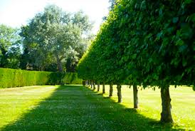 Good Backyard Trees by Best Privacy Trees Hedges U0026 Shrubs With Landscaping Ideas Photos