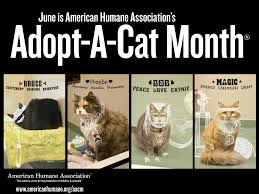 june is adopt a shelter cat month cat opedia