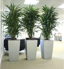 low light plants for office large indoor plant low light indoor plants low light hsvredshorts club
