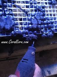 Live Rock Aquascaping Ideas Aquascaping Rock Walls For A Reef Tank Corallore Com