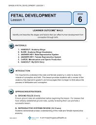 fetal development teachingsexualhealth ca