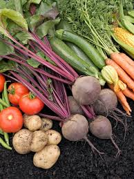 Fall Vegetables Garden by Getting The Most Out Of Vegetable Gardens Vegetables You Can Plant