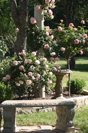 20 best my roses my photos images on pinterest 3 4 beds climber