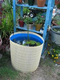 fish suggestion for container pond page 2