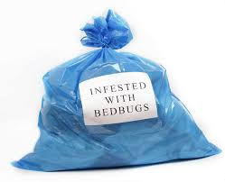 How To Get Rid Of Bed Bugs At Home How To Get Rid Of Bedbugs Safebee