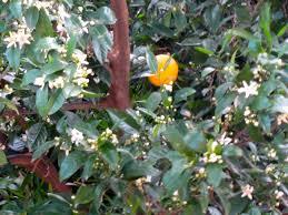 orange flower water chagrinnamon toast