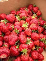 edible fruits taste edible fruits and seeds 52 things outside
