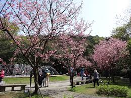Cherry Blossom Map Map Of Best Cherry Blossom Viewing Spots In Taiwan Taiwan News