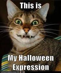 Halloween Cat Meme - halloween cat crazy as a bag of hammers humor funny lol memes