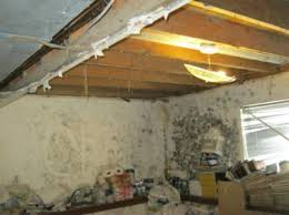 How To Stop Mold In Basement by Mold In Basement Removal Diy Vs Calling A Professional