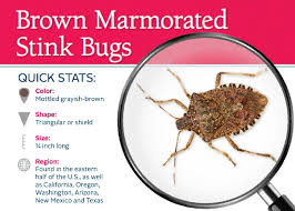 21 best pest i d cards images on management insects