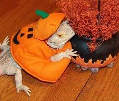 lizard love with a twist of halloween costume idea for my bearded