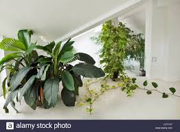 interior of house with plants in containers including