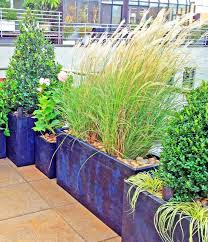 roof garden plants nyc roof garden paver deck terrace container plants grasses