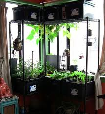 Winter Indoor Garden - 99 best window garden images on pinterest indoor gardening