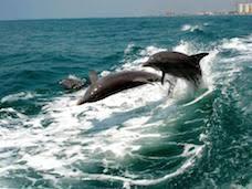 St Petersburg Fl Beach House Rentals by Florida Gulf Coast Beach Vacation Rentals Florida Lifestyles