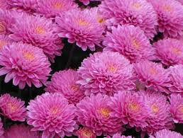 1092 best beautiful flowers everywhere images on pinterest