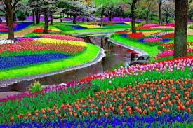 largest flower in the world largest flower garden in the world greenfain