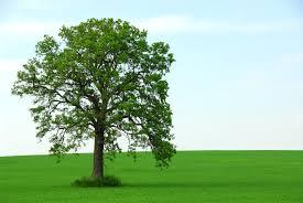 the tree of life revelation 22 u2013 revelation made clear