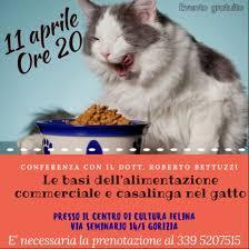alimentazione casalinga gatto alimentazione commerciale e casalinga per il gatto centro di