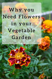 flowers for vegetable garden why you need flowers in your vegetable garden sweet love and ginger