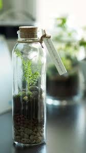 best 20 small terrarium ideas on pinterest indoor mini garden