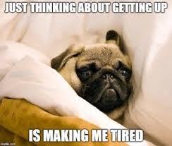 Funny Pug Memes - 8 funny pug memes pinteres